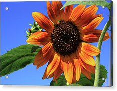 Happy Days Of Summer Acrylic Print
