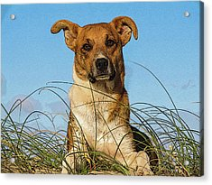 Happy Dog At The Beach Acrylic Print