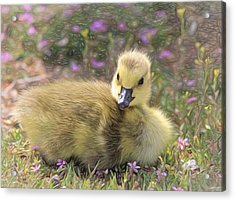Happy Easter To You Acrylic Print