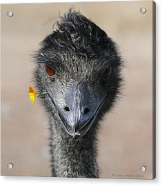 Happy Emu Acrylic Print
