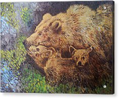 Grizzly Bear Acrylic Print by Remy Francis