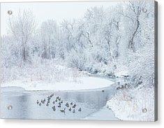 Happy Geese Acrylic Print