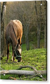 Acrylic Print featuring the photograph Happy Grazing by Angela Rath