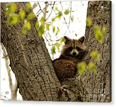 Happy In Her Hideout Acrylic Print