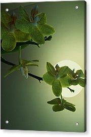 Happy Moon Acrylic Print by Nereida Slesarchik Cedeno Wilcoxon