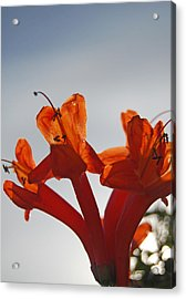 Happy Orange Acrylic Print by Jean Booth