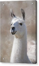 Acrylic Print featuring the photograph Happy by Robin-Lee Vieira
