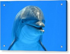 Happy Smiling Dolphin Acrylic Print by Richard Bryce and Family