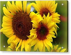 Acrylic Print featuring the photograph Happy Sunflowers by Kay Novy