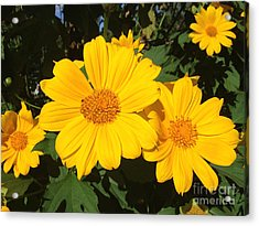 Happy Yellow Acrylic Print