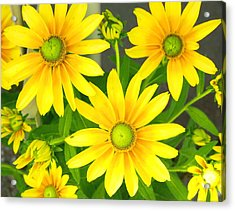 Happy Yellow Summer Cone Flowers In The Garden Acrylic Print