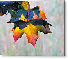 Harbinger Of Autumn Acrylic Print by Sean Griffin