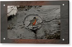 Harbinger Of Spring Acrylic Print by Doug Bratten