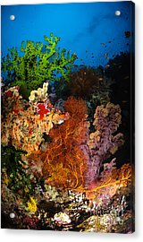Hard Coral And Soft Coral Seascape Acrylic Print by Todd Winner