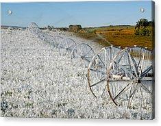 Hard Land Farming Acrylic Print by David Lee Thompson