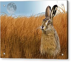 Hare In Grasslands Acrylic Print