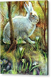 Hare Acrylic Print by Natalie Berman