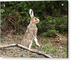 Hare That Acrylic Print by DeeLon Merritt