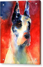 Harlequin Great Dane Watercolor Painting Acrylic Print