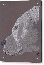 Harlo Acrylic Print by Stacey Jasmin