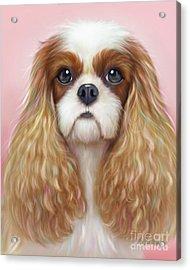 Harper Cavalier Acrylic Print by Catia Cho