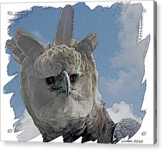 Harpy Eagle Portrait Acrylic Print