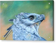 Harpy Eagle Two Acrylic Print by Ceci Watson