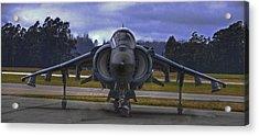 Harrier Acrylic Print by Paul Owen