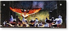Harris Creek Gulls Acrylic Print