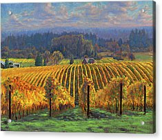 Harvest Gold Acrylic Print by Michael Orwick
