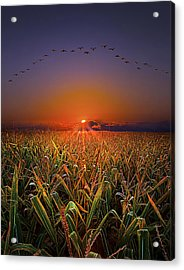 Harvest Migration Acrylic Print