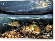 Harvest Moon Walleye 1 Acrylic Print by JQ Licensing