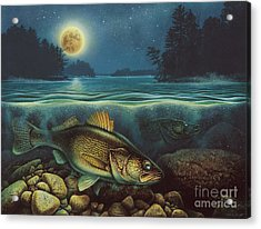 Harvest Moon Walleye IIi Acrylic Print