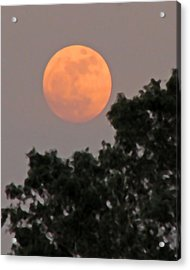 Harvest Moonrise Acrylic Print
