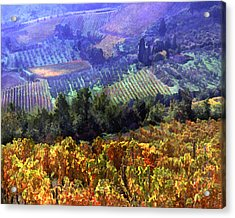Harvest Time At The Vineyard Acrylic Print by Elaine Plesser