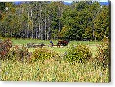 Harvest Time Acrylic Print by David Lee Thompson