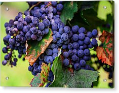 Harvesting 1 Acrylic Print by Jenny Rainbow