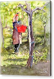 Acrylic Print featuring the painting Harvesting Anna's Grapes by Bonnie Rinier