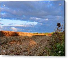 Harvesting Corn Acrylic Print by Tina M Wenger