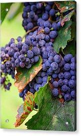 Harvesting Acrylic Print by Jenny Rainbow