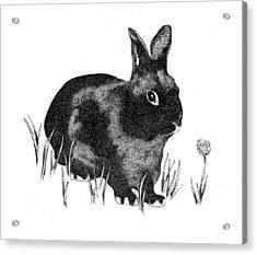 Hasenpfeffer Acrylic Print