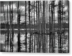 Hatchie National Wildlife Refuge Reflections Acrylic Print by James Larkin