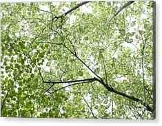 Hau Tree Canopy Acrylic Print