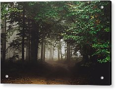 Haunted Forest #2 Acrylic Print
