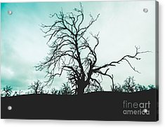 Haunted Wasteland Acrylic Print by Jorgo Photography - Wall Art Gallery