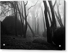 Acrylic Print featuring the photograph Haunted Woods by Jorge Maia