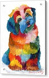 Hava Puppy Havanese Acrylic Print by Sherry Shipley