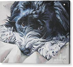 Havanese Black And White Acrylic Print