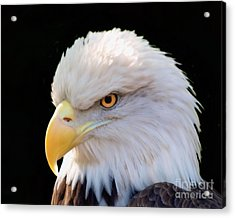 Acrylic Print featuring the photograph Have My Eye On You by Ken Frischkorn