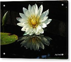 Haven Hospice Water Lily Acrylic Print by Judy  Waller